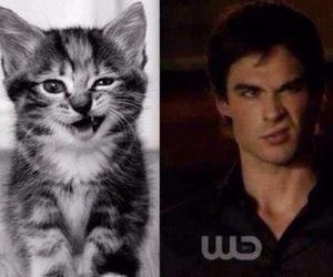 cat, ian somerhalder, and damon image