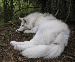 wolf beautiful white landscape nature forest amazing fantasy game of thrones