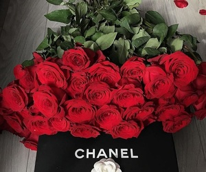 rose, chanel, and girl image