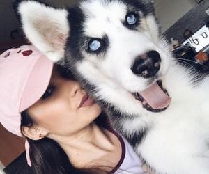 animal, blueeyes, and husky image