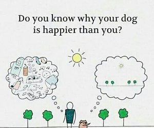 dog, happy, and quotes image