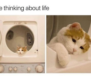 cat, meme, and animal image