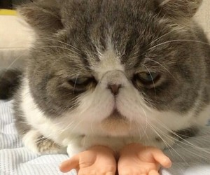 cats, hands, and cutecats image
