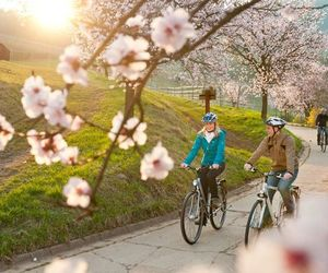 bike, blossoms, and cherry blossom image