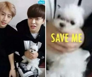 meme, youngjae, and got7 image