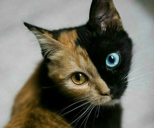 eyes and spectacular image