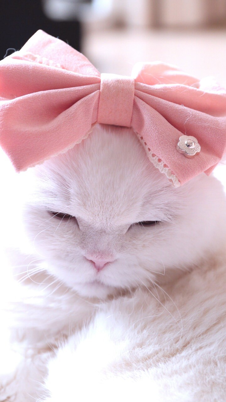 Animals Baby Baby Cat Background Beautiful Beauty Bow Cat Cute Animals Cute Baby Cute Kitty Dots Iphone Kawaii Kitten Kitty Nature Photography Pink Plush Still Life Wallpapers We Heart It White Kitty