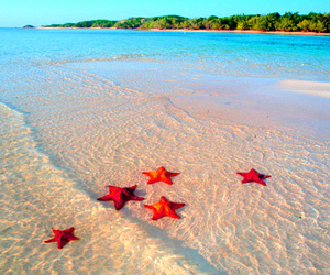 beach, sea, and sea stars image