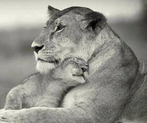 black and white, cub, and lions image