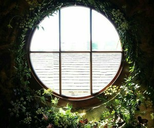 window, plants, and green image
