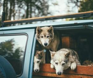 animals, nature, and roadtrip image