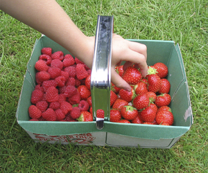 aesthetic, nature, and strawberry image