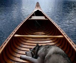 dog, boat, and travel image