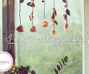 flowers, quote, and winter image