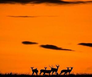africa, orange, and orange sky image