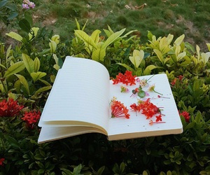 atmosphere, book, and flowers image