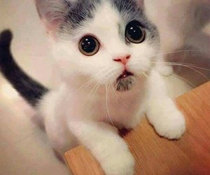 cats, games, and cute image