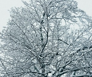 branches, snow, and tree image
