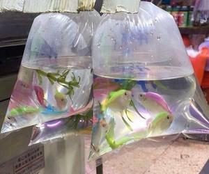 fish, grunge, and water image