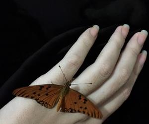 black, borboleta, and butterfly image
