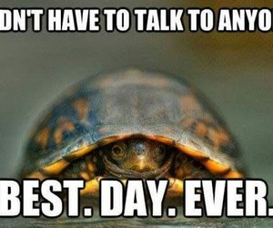 turtle, funny, and lol image