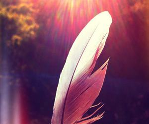 feather, hippie, and nature image