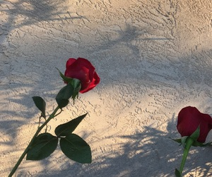 aesthetic, grain, and roses image