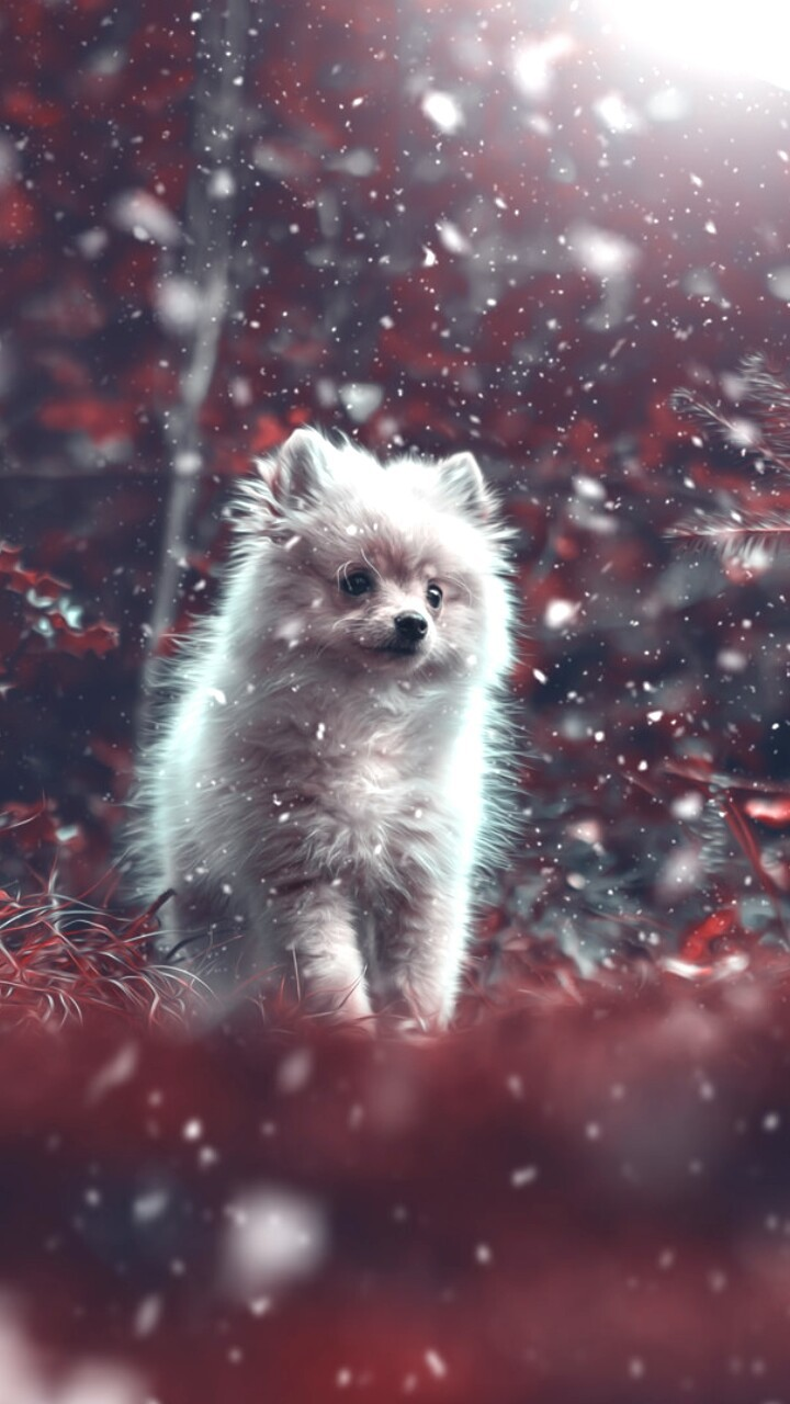Wallpaper Puppy Beautiful Dogs