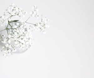 flowers, minimalist, and white image