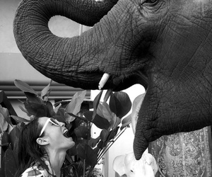 elephant and black and white image