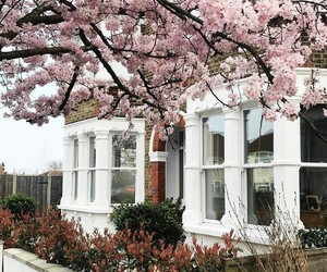 london, pink, and spring image