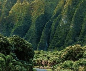 nature, green, and travel image