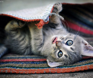 eyes, pretty, and kitty image