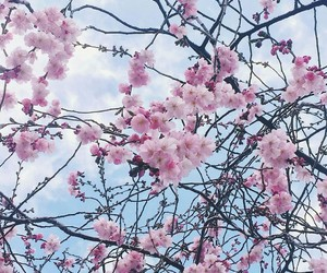 blossom, cherry, and spring image