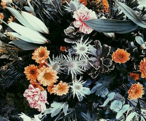 flores, flowers, and plants image
