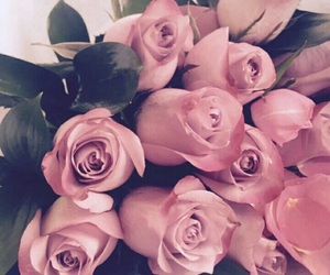 aesthetic, beautiful, and pink roses image