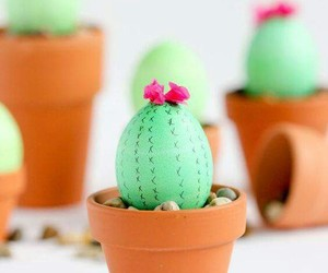 diy and cactus image