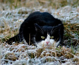 cat, frost, and kitty image