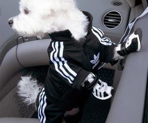 dog and adidas image