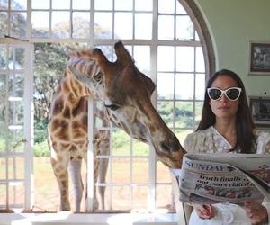 giraffe, animal, and girl image