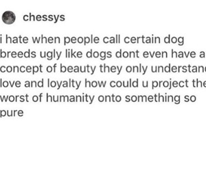 dogs, funny, and same image