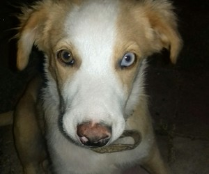 blue, brown, and dog image