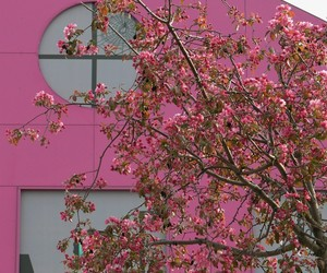 architecture, photography, and pink image