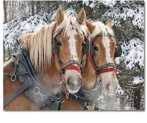 animals, horses, and snow image