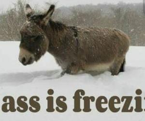 ass, freezing, and jackass image