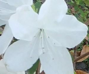 flower, white, and xoxo image