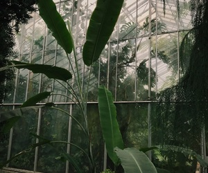 green, greenhouse, and vibes image