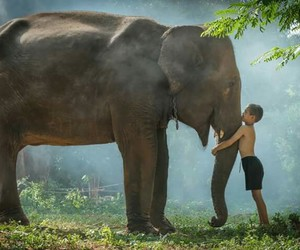being, elephant, and human image
