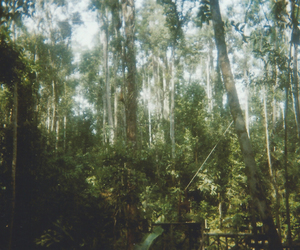 film, forest, and green image