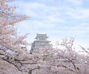 japan, aesthetic, and flowers image